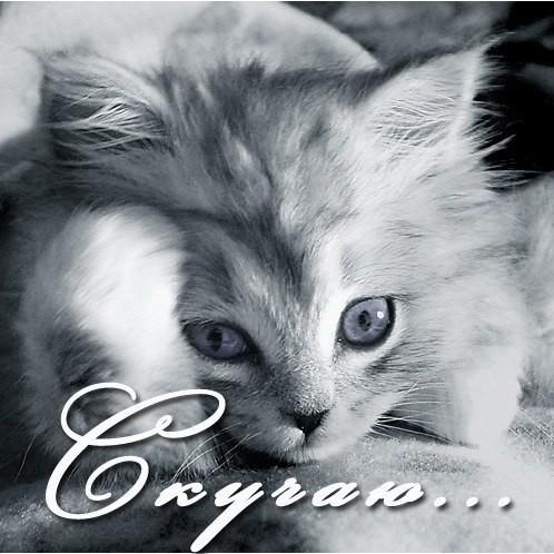 Картинки котят с надписями я скучаю по тебе